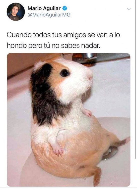 BelenDeLaFuente's memes, images and stories